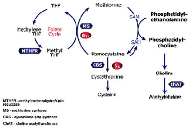 MTHFR – Methylenetratrahydrofolate Reductase – what a mouthful!!!