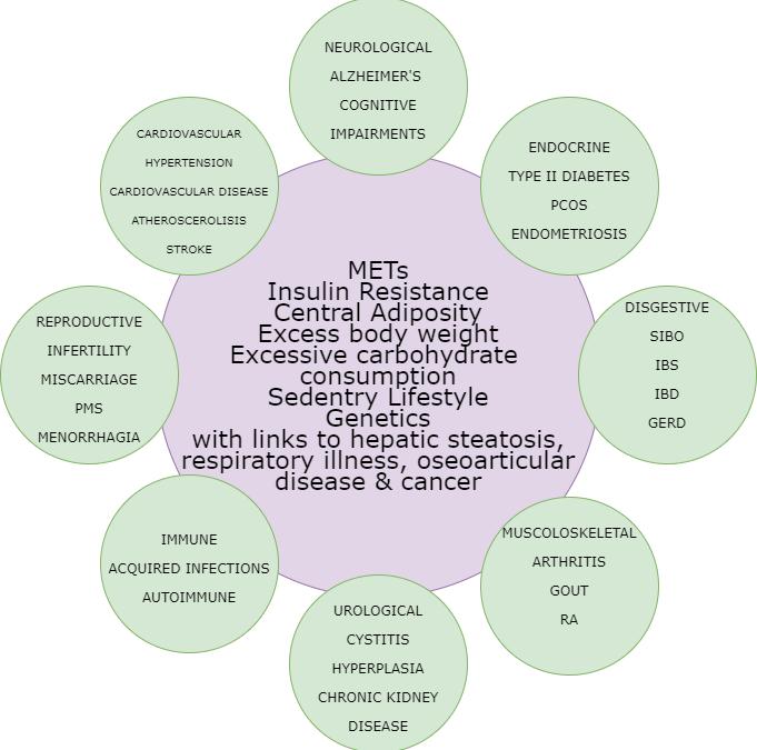 MTHFR MetS Insulin Resistance Diabetes