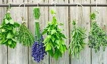 Herbal Medicine, acute and chronic care, safety, efficacy and availability