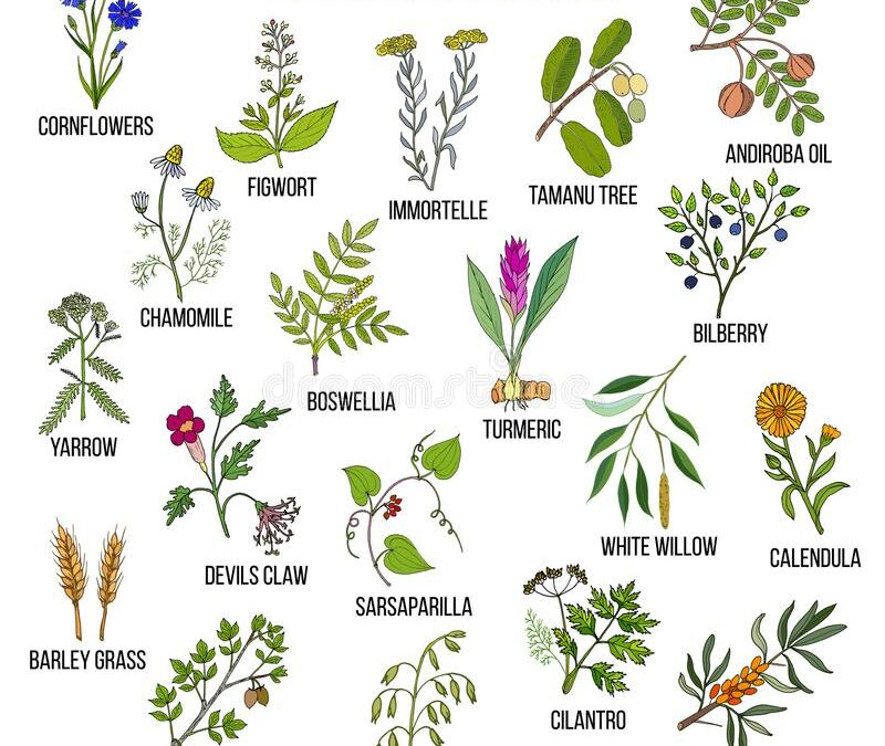 Pain, Inflammation and Natural Remedies